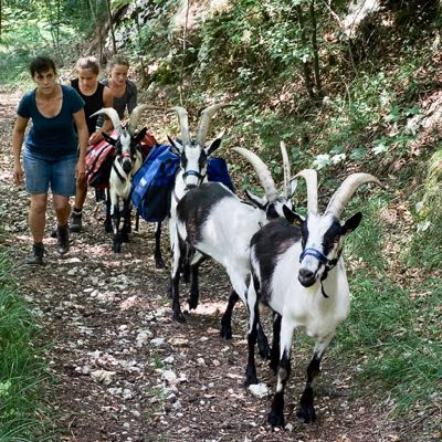 Themen Wanderung Krimi mit Packgeissen Jurapark Aargau
