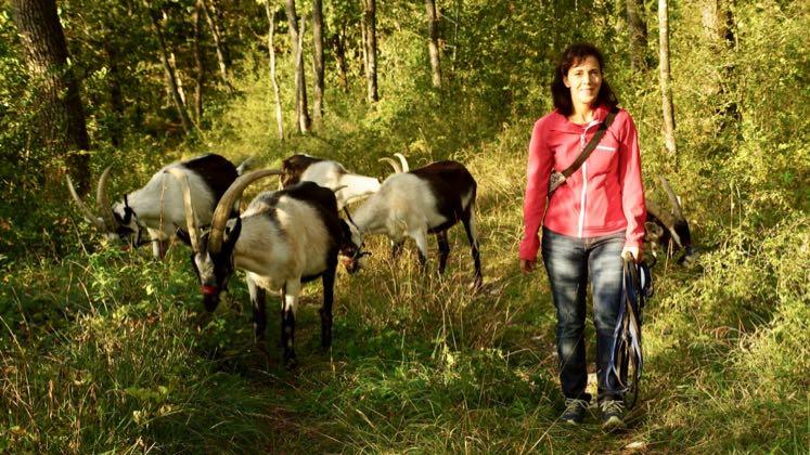 Wanderleiterin Vera Schmid Wanderung mit Packgeissen Jurapark Aargau